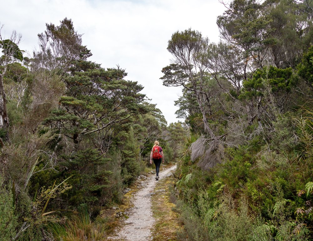 The heath near James Mackay Hut