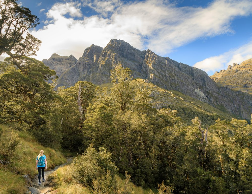 The path before Earland Falls, Routeburn Track