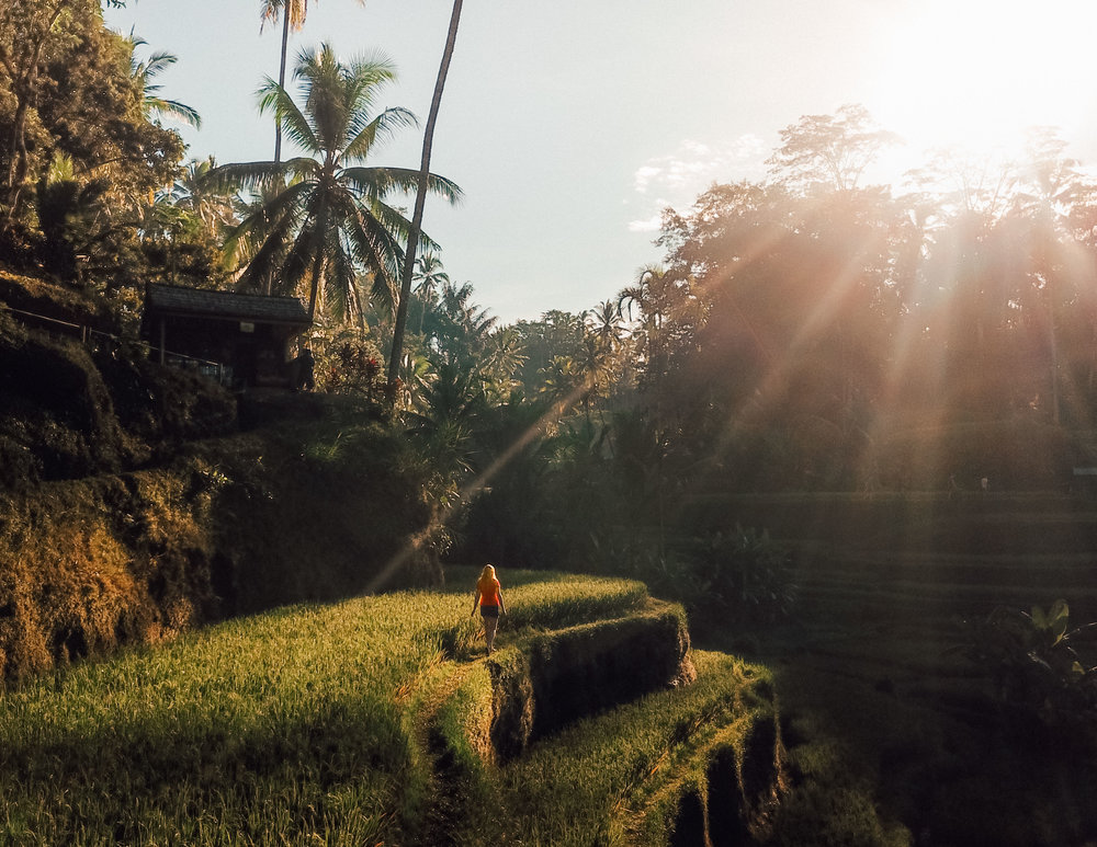 Amazing things to do in Ubud: Tegalalang Rice Terrace