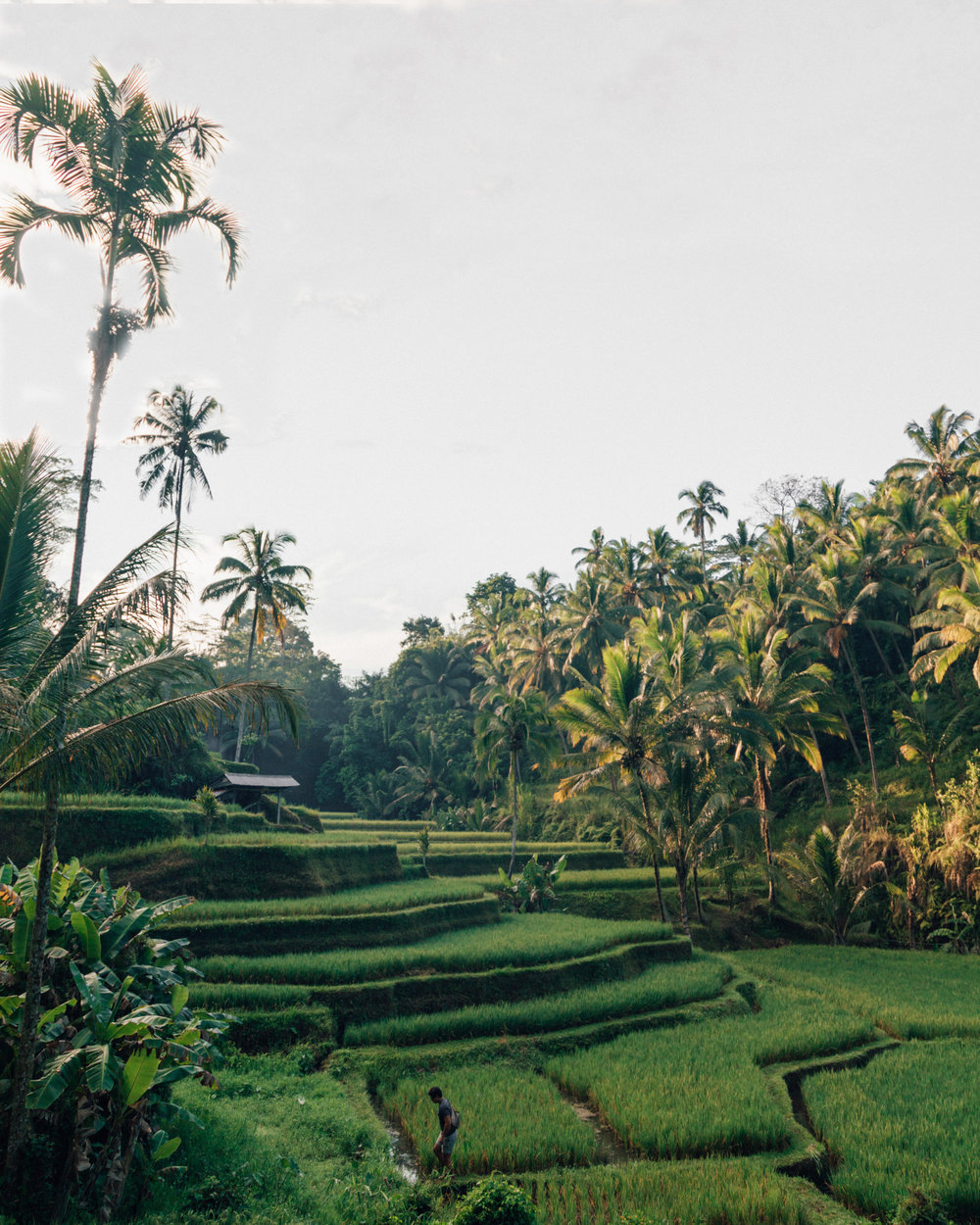Amazing things to do in Bali: Tegalalalang Rice Terrace
