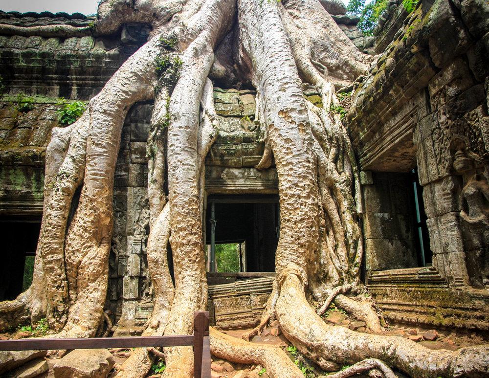 Cambodia Itinerary: Ta Prohm