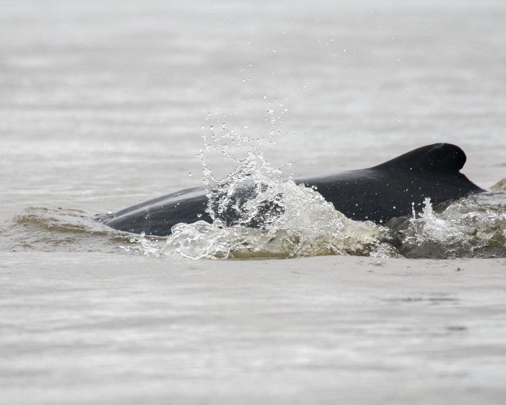 Cambodia Itinerary: Irrawaddy River Dolphins