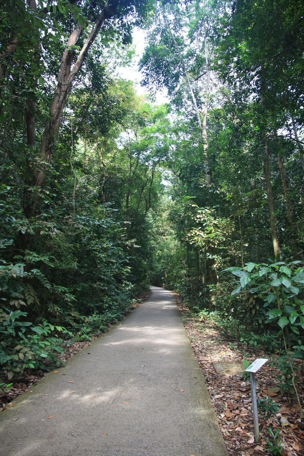 Best things to do in Singapore: Bukit Timah