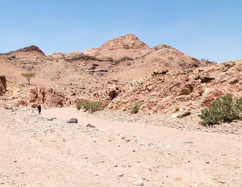 Dana Biosphere Reserve: Wadi Dana Trail