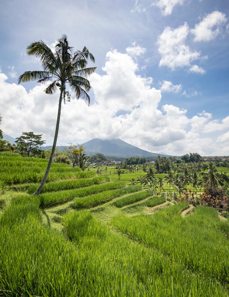 Bali Itinerary 7 days: Jatiluwih