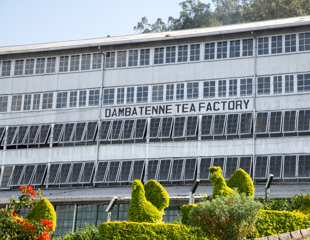 Ella to Lipton's Seat: Dambatenne Tea Factory