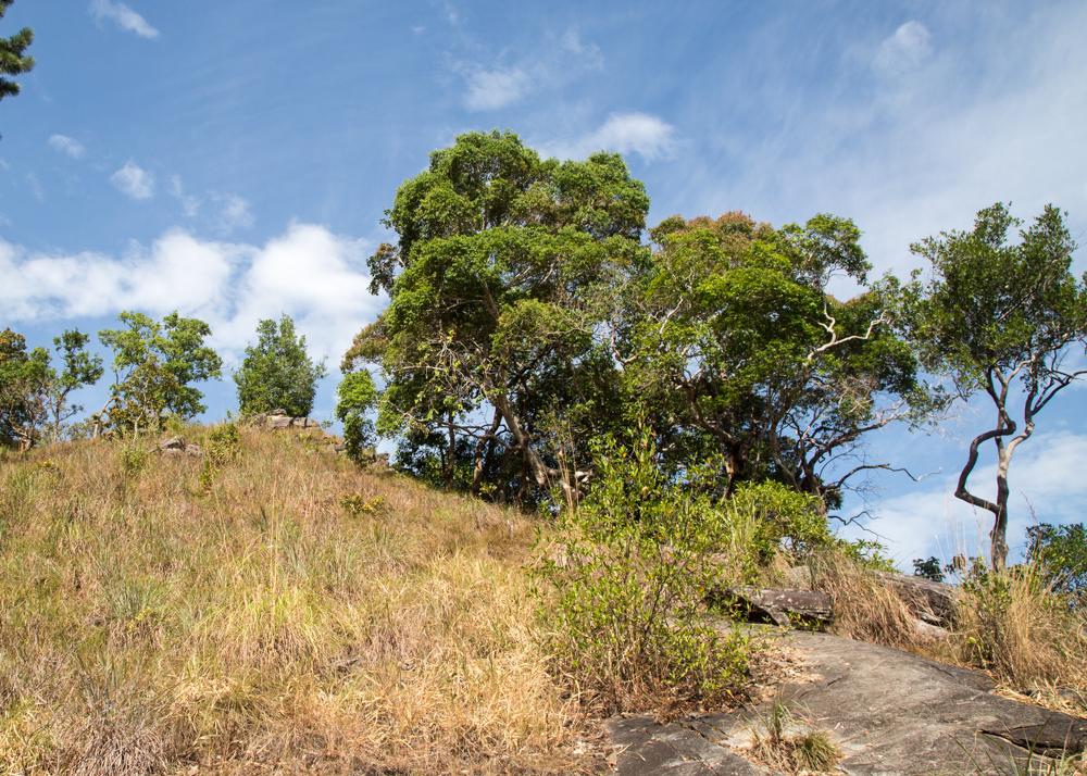 The track back from Diyaluma Falls