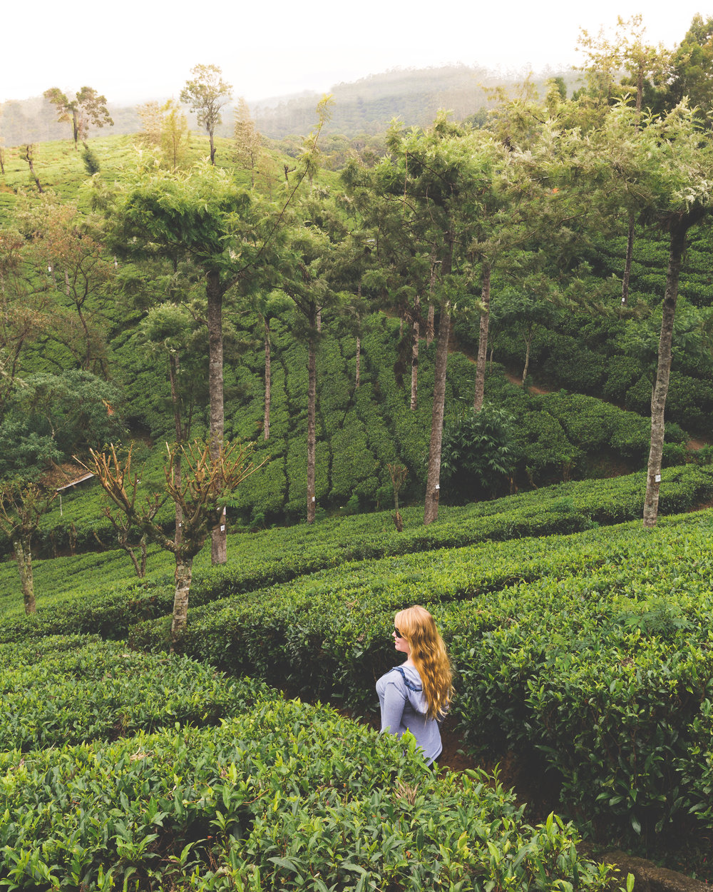 Instagrammable Sri Lanka - Pedro Tea Plantation