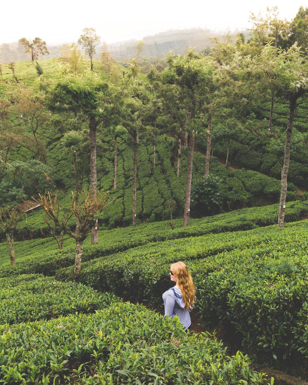 Sri Lanka Itinerary - Nuwara Eliya