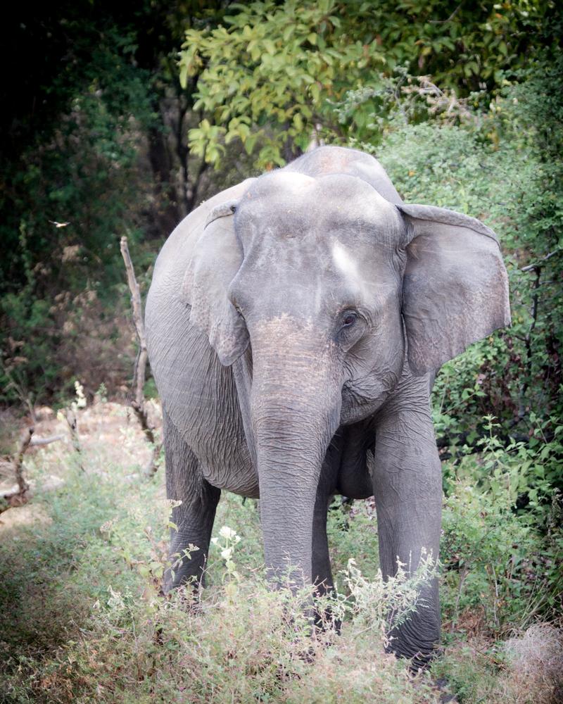 Kaudulla National Park Safari - When to go