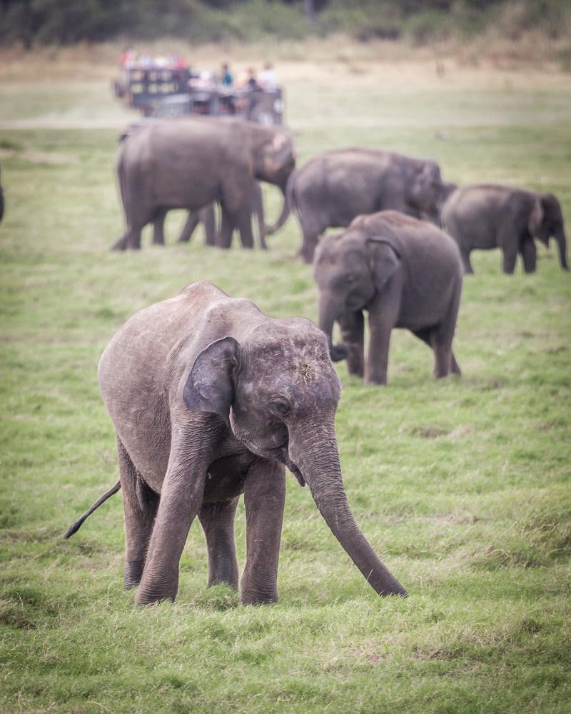 Kaudulla National Park Safari Price