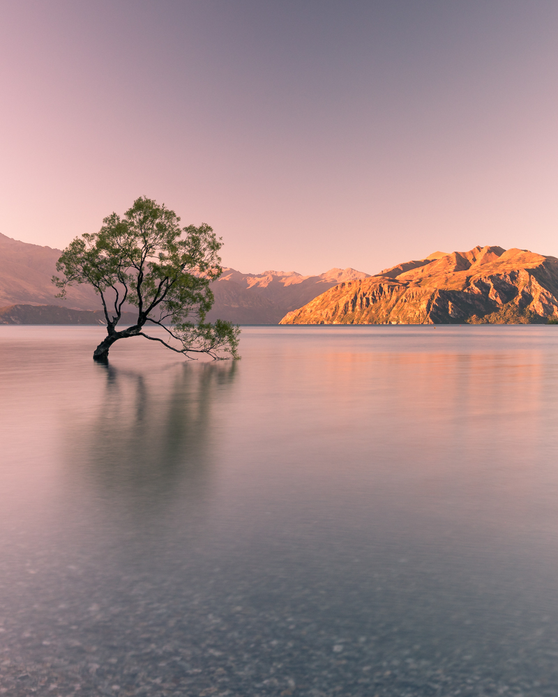 2 week New Zealand South Island Itinerary: That Wanaka Tree