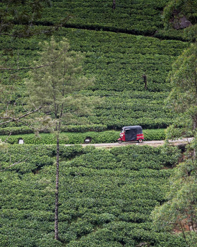 Sri Lanka Itinerary 2 weeks: Nuwara Eliya