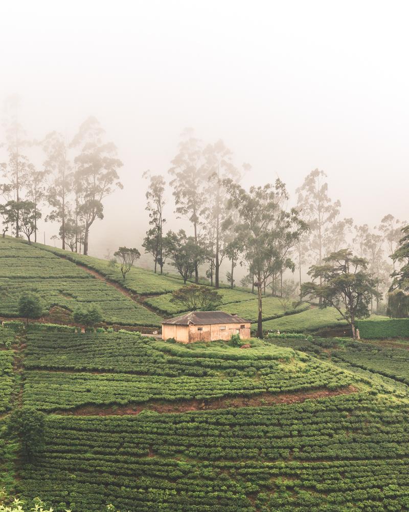 Best time to visit Sri Lanka - Nuwara Eliya