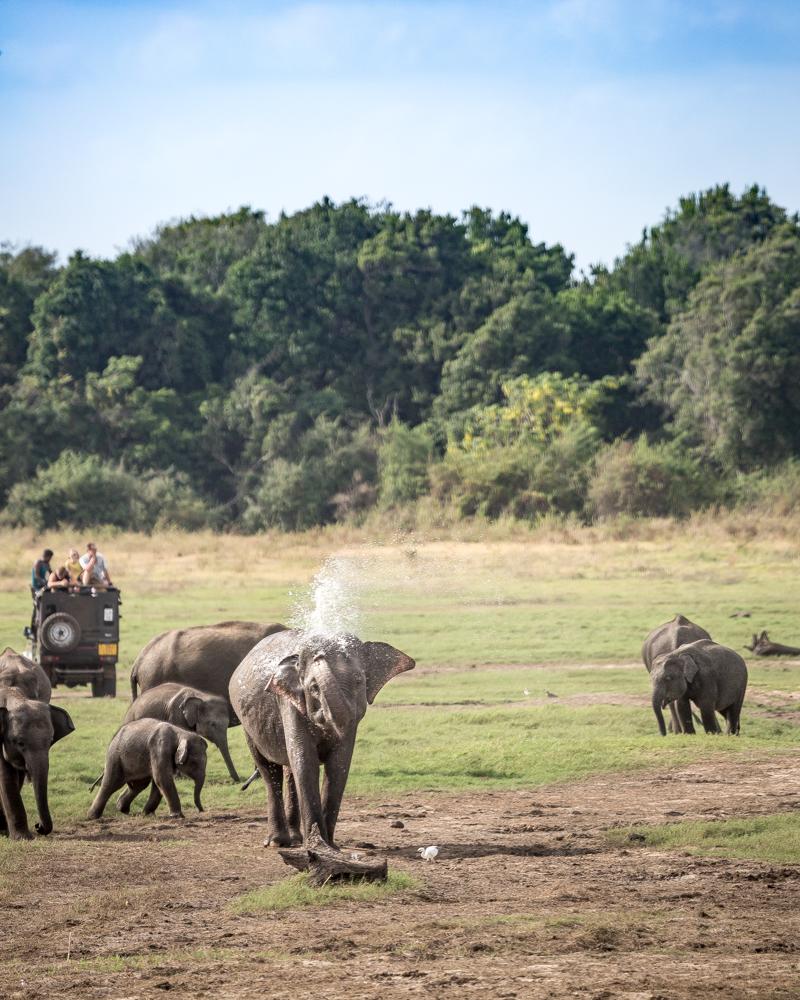 Best time to visit Sri Lanka - Elephant Gathering