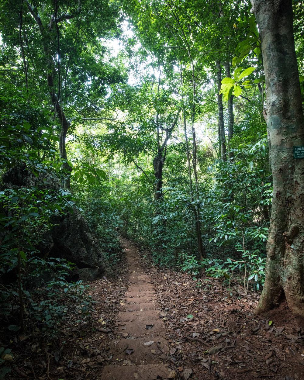 The path to Ngu Lam Peak - Cat Ba Island
