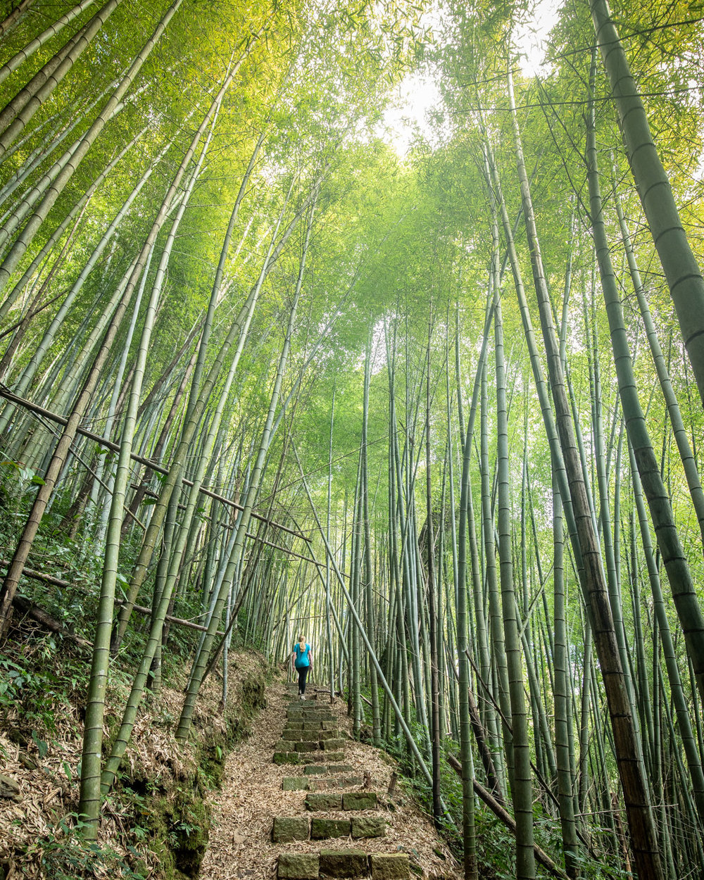 The Fenrui Trail - Best things to do in Alishan