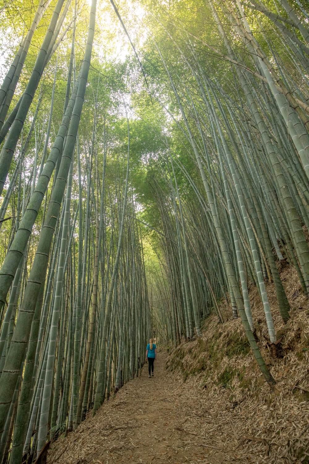 The bamboo forests of Fenrui Trail