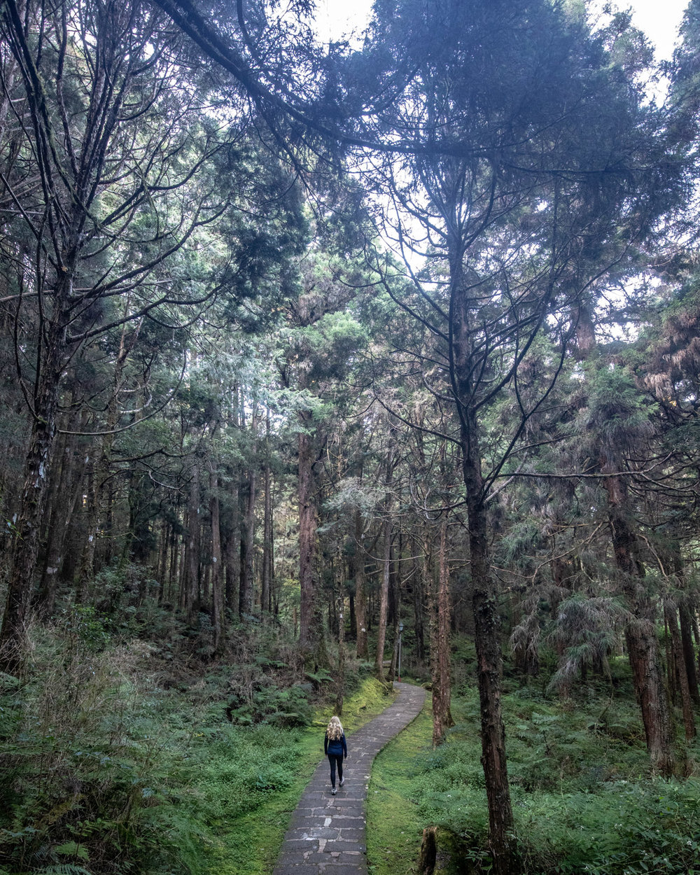 The walk back from Zhaoping Station to Alishan