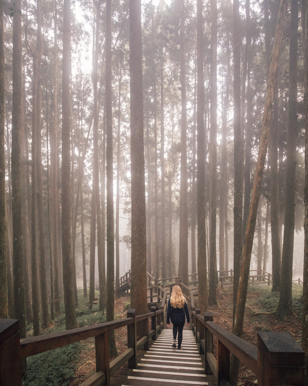 The trees and boardwalks in Alishan
