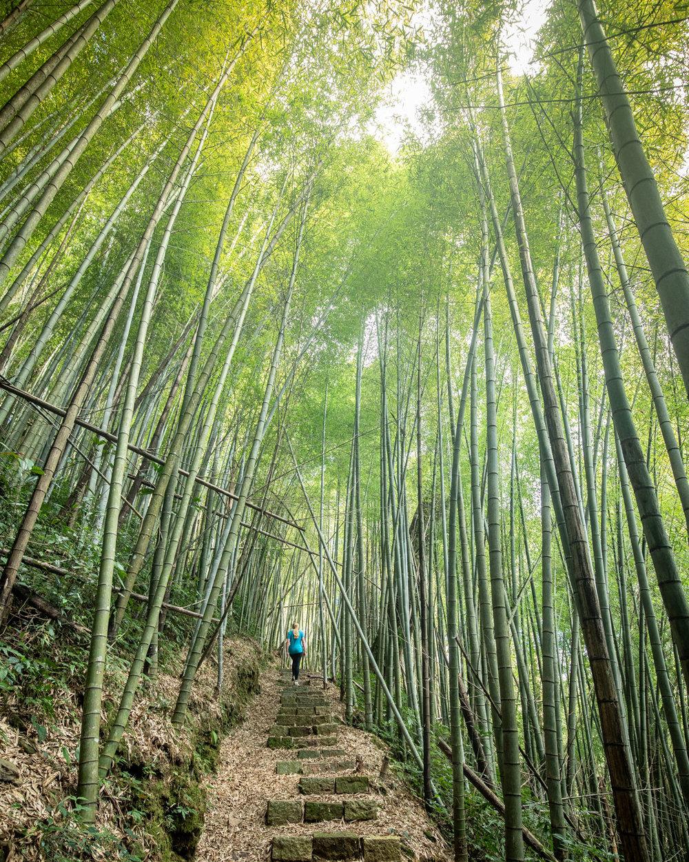 Fenrui Historic Trail - Bamboo Forest