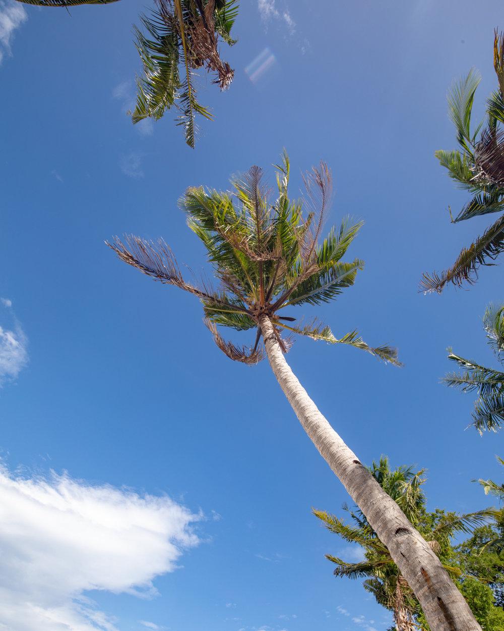 Palm Tree Views on Banana Island
