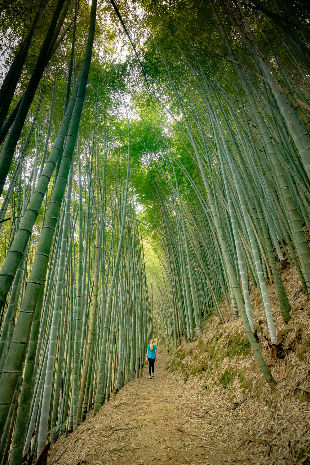 The bamboo forests of the Fenrui Trail