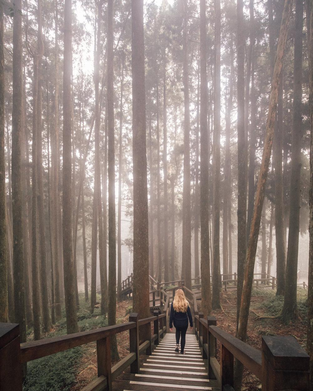 Alishan Forests