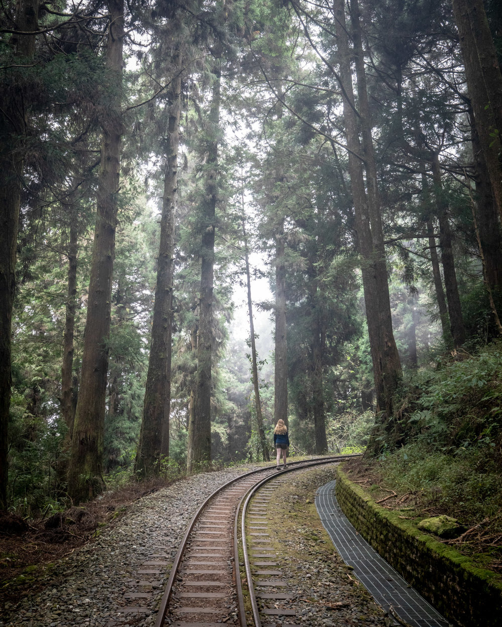 Shuishan Giant Tree Trail - Alishan in Taiwan