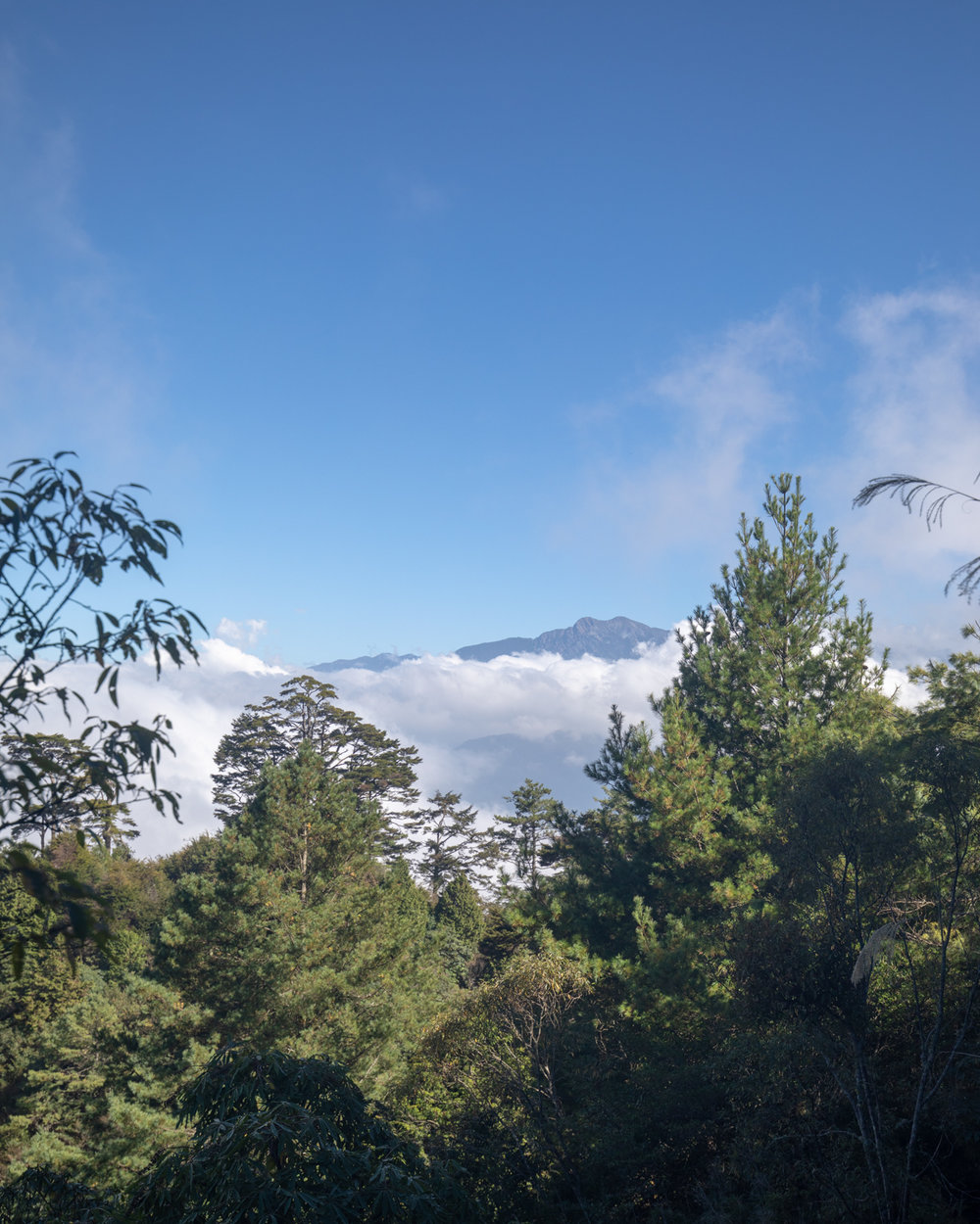 The views from the Tashan Trail in Alishan