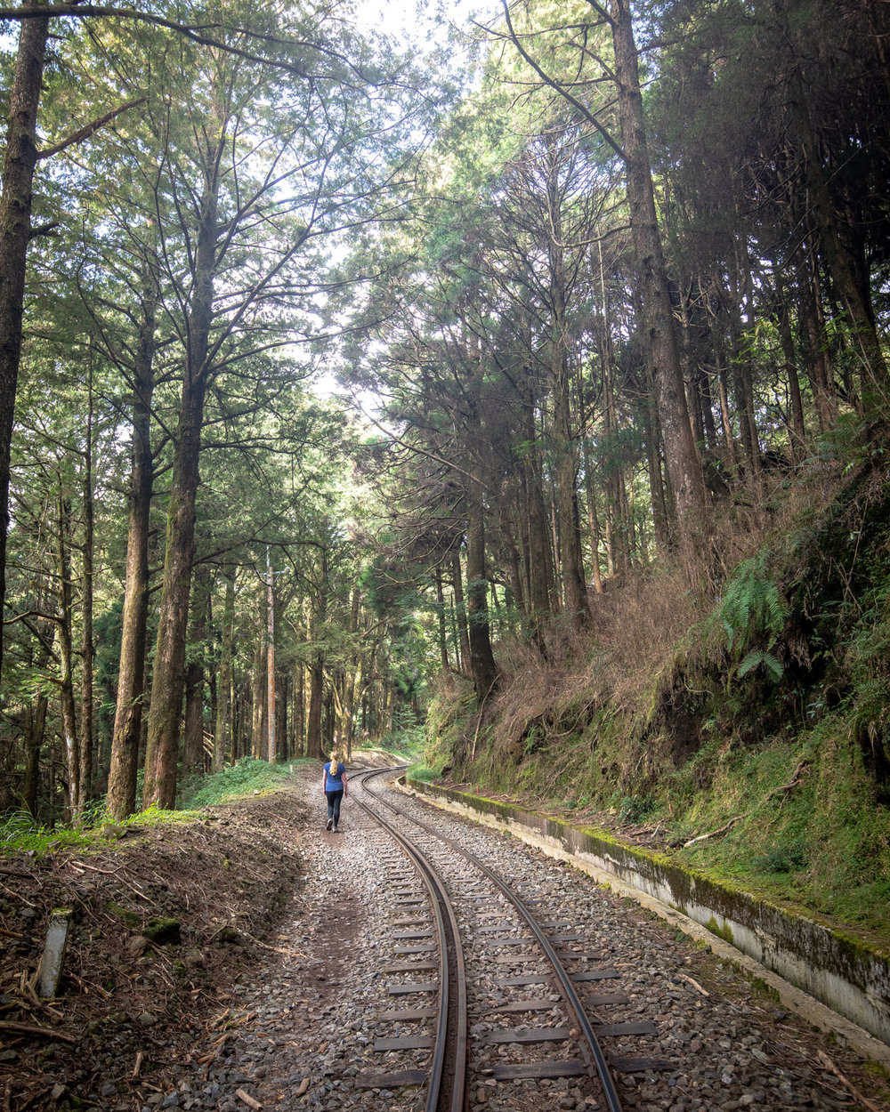 The Tashan Trail - Alishan