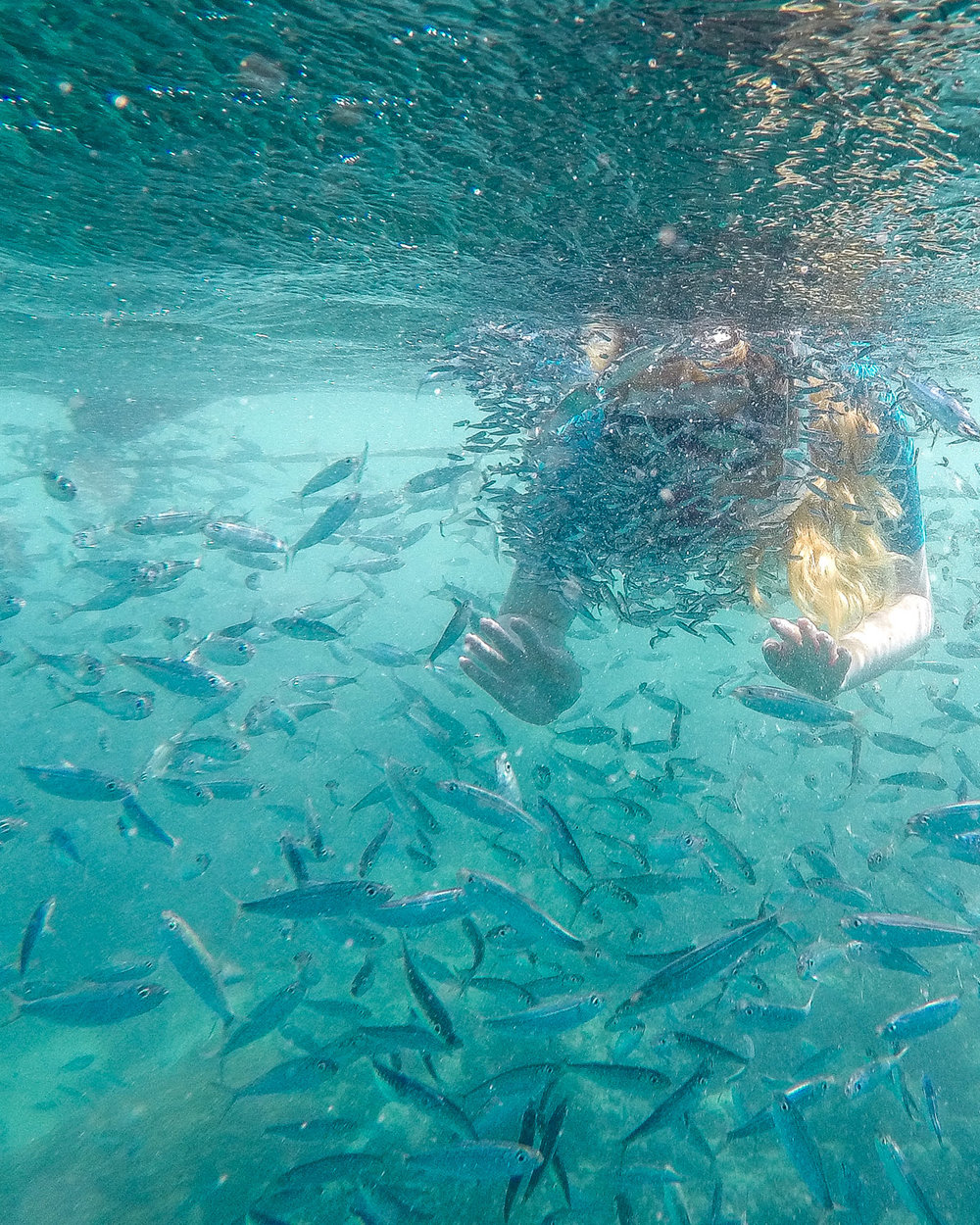 The sardine run off the coast by Moalboal