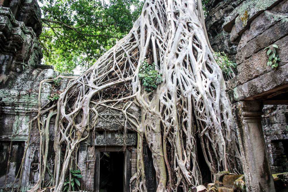 Ta Prohm - Best things to do in Cambodia