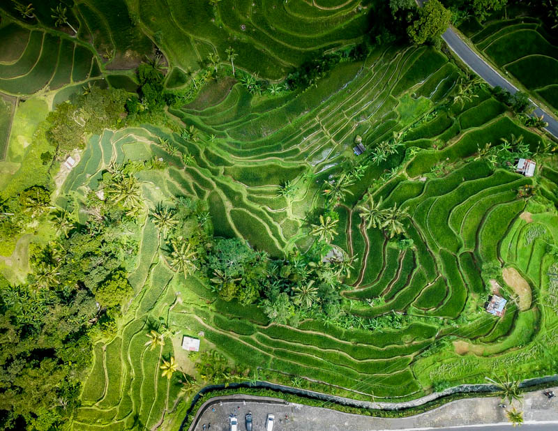 Jatiluwih Rice Terrace How To Visit This Stunning Place Walk My World