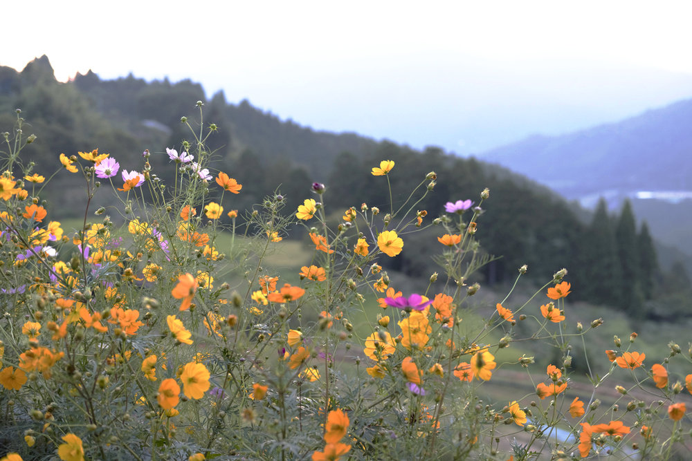 These beautiful flowers came to greet us on more than one occasion when conquering a mountain