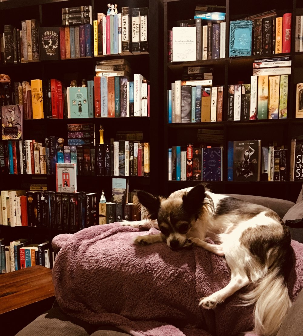 pedro and book case.jpg
