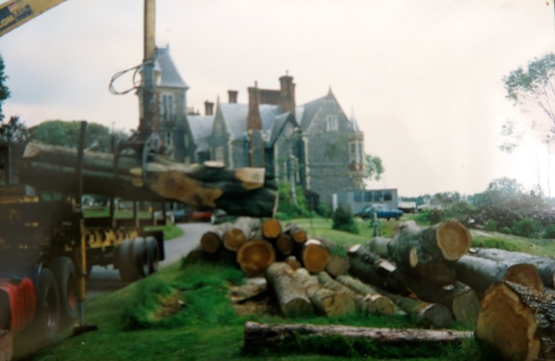 Logs from felled trees awaiting collection by the sawmill