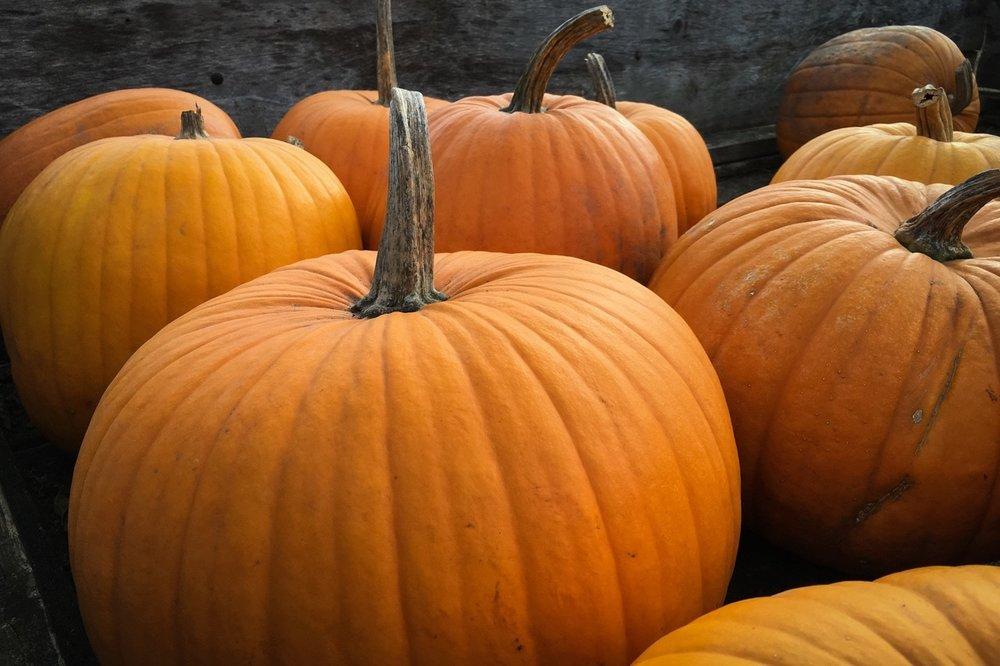 Medium Pumpkin