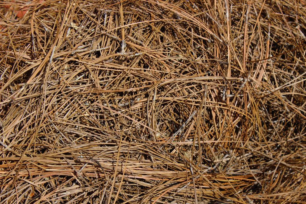 - Pine Straw