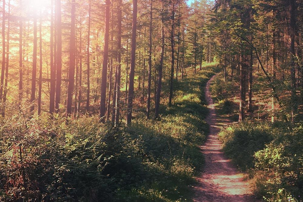 woodlandpath_1000.jpg