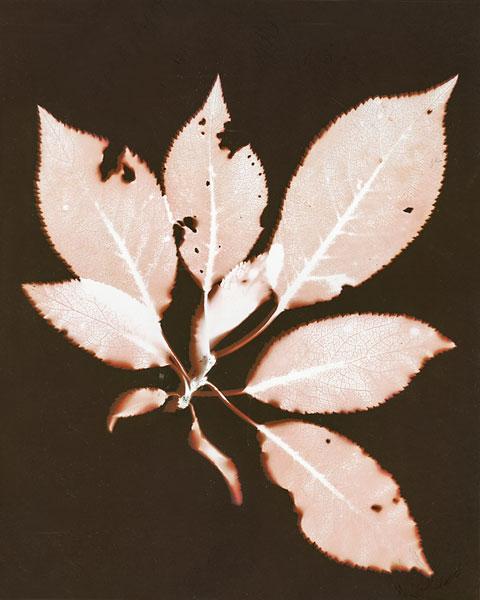 wandaHolmesOliver-plum.jpg