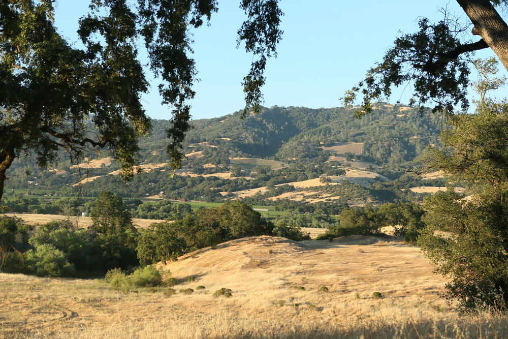 267 ACRES IN NORTHERN SONOMA COUNTY Alexander Valley Resort and Residences VIDEO