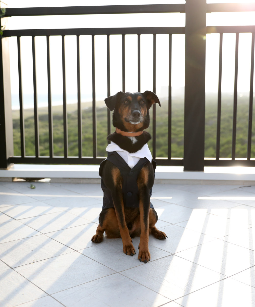 dog ring bearer.jpg