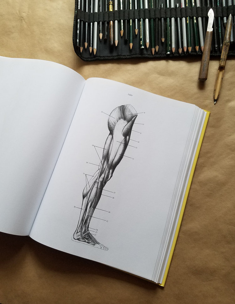 Anatomy For The Artist Jeno Barcsay Creative Meow