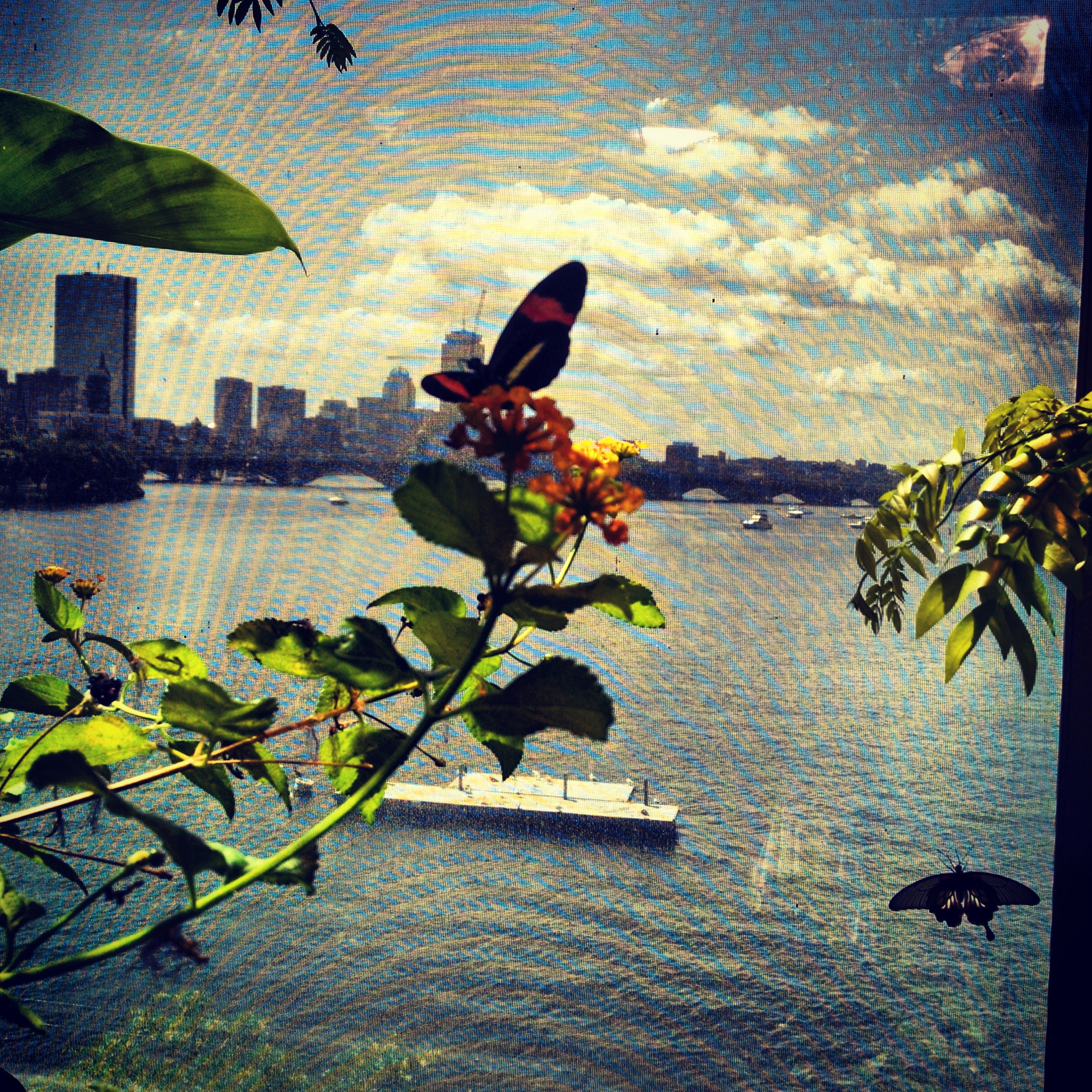 Butterfly house overlooking Boston City Skyline