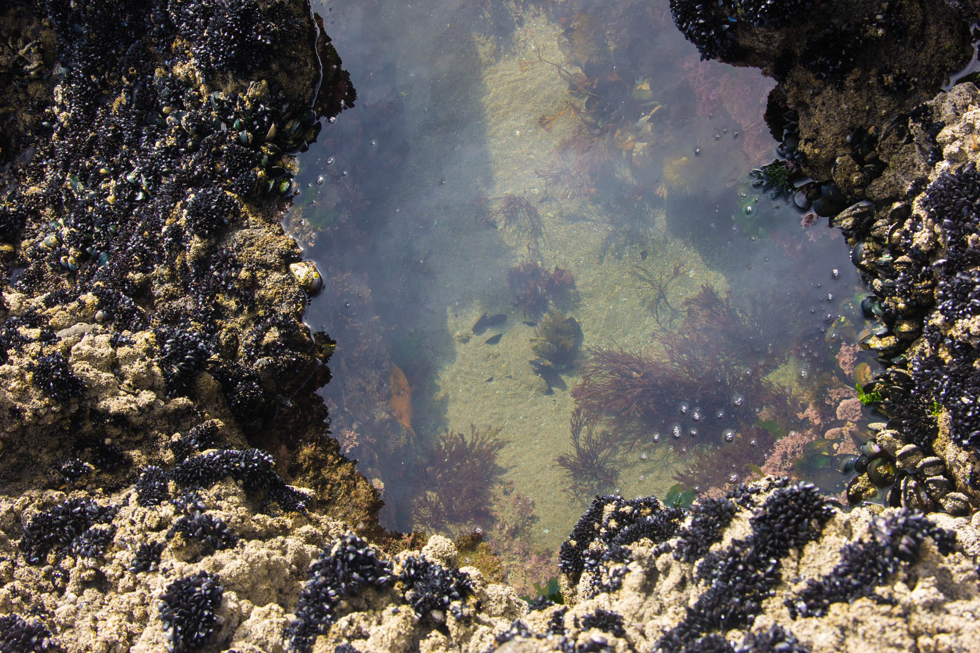 tide pool at piha new zealand.