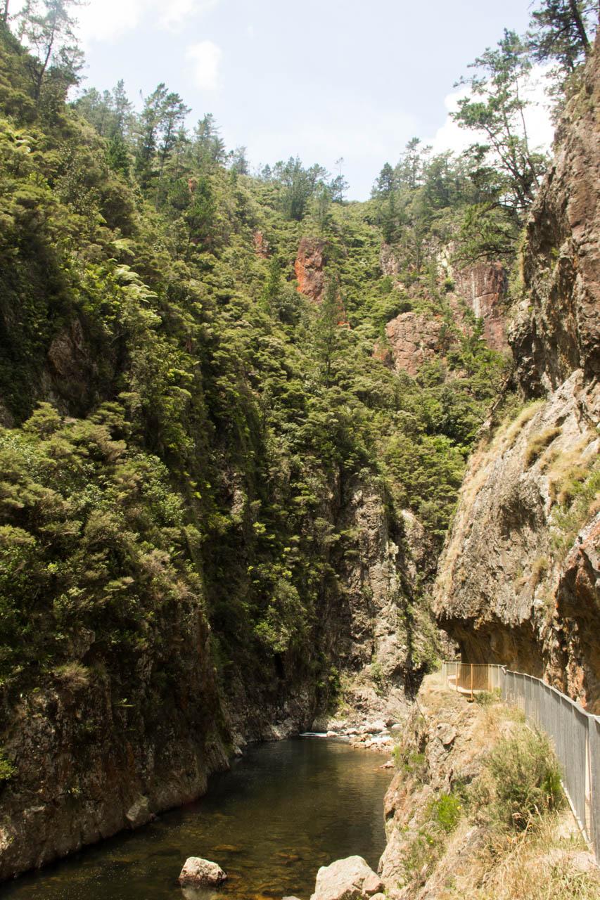 karangahake gorge walkway new zealand travel adventures