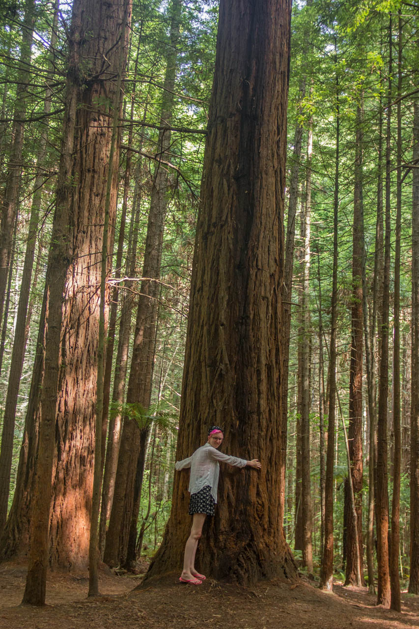 Just a bunch of tree huggin' hipsters, that's what we are...