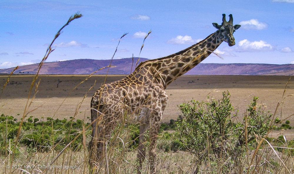 Africa Animals-01.jpg