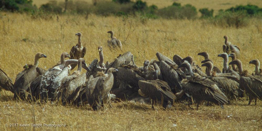Africa Animals-05.jpg